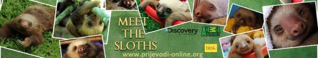 meet_the_sloths